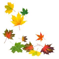 Wall Mural - fallende Herbstblätter vor weißem Hintergrund