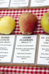 Adams Pearmain apple dates from the 1800's