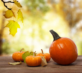 Squashes and pumpkins on shinning fall background