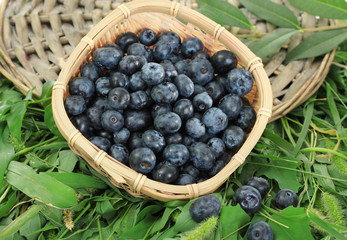 Blueberries in wooden basket on wicker tray on grass