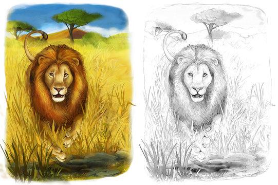 Safari - lion - coloring page