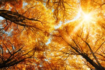 Wall Mural - Die Herbstsonne scheint durch Baumkronen