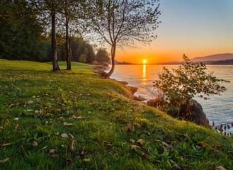 Fotomurales - Sunset along grassy shore