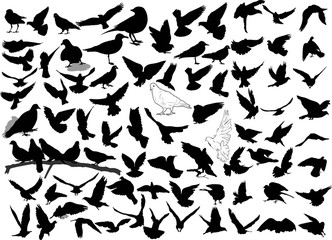 Set of 84 birds and silhouettes of birds
