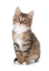 Cute tabby kitten on a white background.