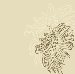 hand drawing sunflower vetor