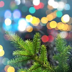 Fir tree branch closeup photo with colorful lights bokeh