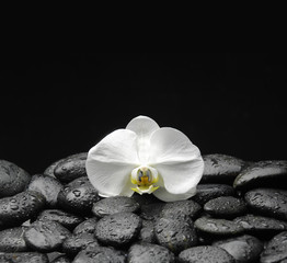 beautiful orchid on beach stones background