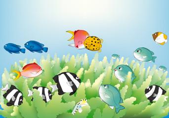 サンゴ礁の小さな魚