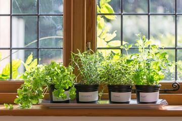 Herbs on a windowsill