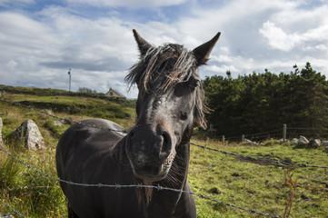 Black horse looking at you! Connemara, Ireland.
