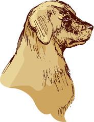 Dog head - bloodhound hand drawn illustration - sketch in vintag