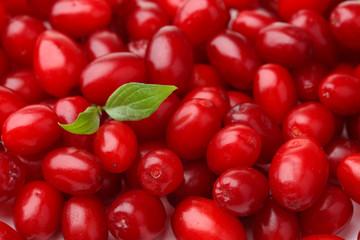 Fresh cornel berries, close up
