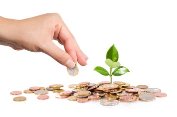 finance new business - start-up - Money and plant  with hand
