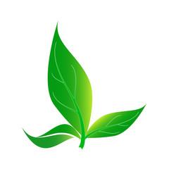 leaf, Background