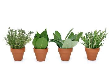 pots d'herbes aromatiques