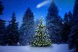 Weihnachtsbaum im Tannenwald