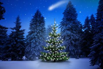 Wall Mural - Weihnachtsbaum im Tannenwald