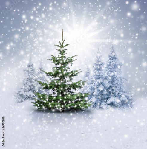 weihnachtsbaum im winterwald stockfotos und lizenzfreie. Black Bedroom Furniture Sets. Home Design Ideas