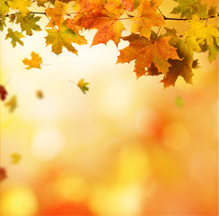 Wall Mural - autumn background