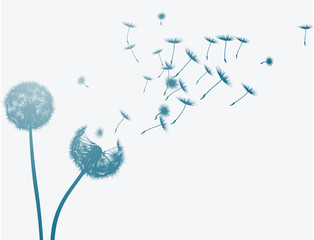 Dandelion in the wind. Vector background.