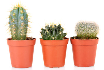 Collection of cactuses, isolated on white