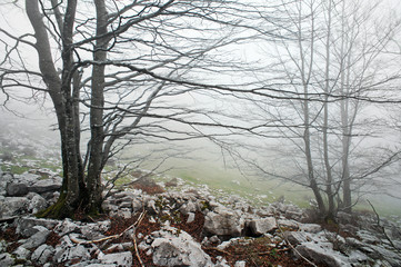 Wall Mural - foggy and rocky forest in the morning