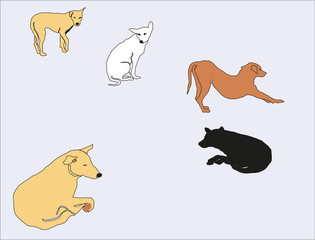 Dogs in different posture