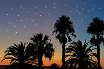 palms and stars