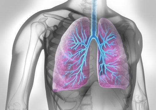 Lunge mit Bronchien in grauem Umfeld