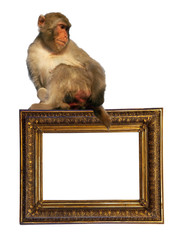 picture frame with macaca