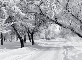 Winter park, scenery