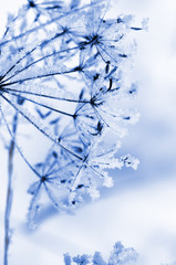 Wall Mural - Winter floral background