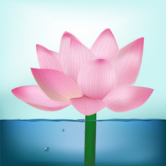 Photo-Realistic Lotus Flower In Water