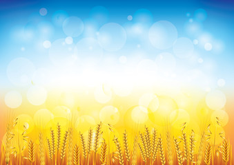 Wheat field vector background