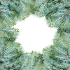 blue fir tree frame