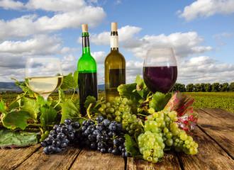 Fototapete - Weinprobe in der Pfalz
