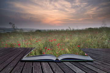 Creative concept pages of book Poppy field landscape in Summer c
