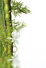 décor aquatique : bambou et fleur blanche de lotus