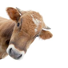 Photo sur Plexiglas Vache Die Kuh