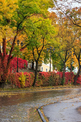 autumn cityscape after rain, with yellowed trees and street lamp