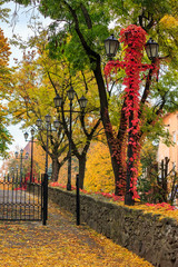 autumn cityscape with foliage and street lamps
