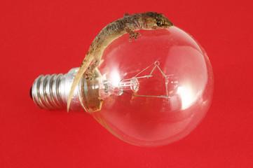 Gecko Lizard and Light Bulb