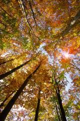 drzewa e lesie jesienią