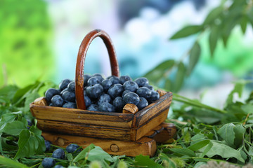 Blueberries in wooden basket on grass on nature background