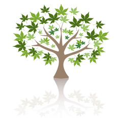 Maple tree Vector Illustration.