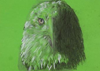 eagle head, chalk sketch