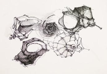 seashells ink drawing