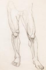 human legs, anatomy study