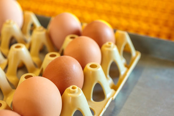 Crate with fresh eggs on top of a conveyor belt
